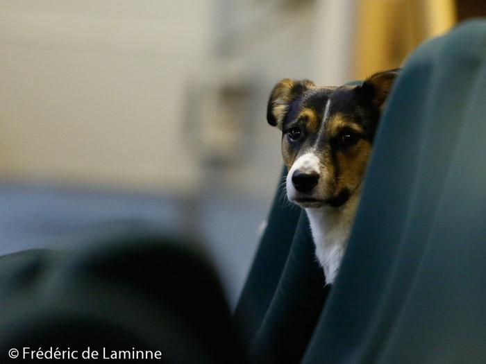 Un chien dans les sièges VIP assiste au Match de Basket-ball R2 dames: Namur B – Sombreffe